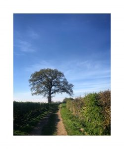 Landscape photograph of a lonely tree