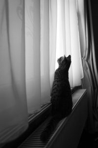 Thoughts from a Suffolk photographer in isolation cat in silhouette chasing natural light shadows